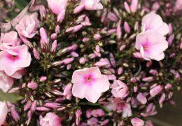 Van Duyvenvoorde Flowers & Plants
